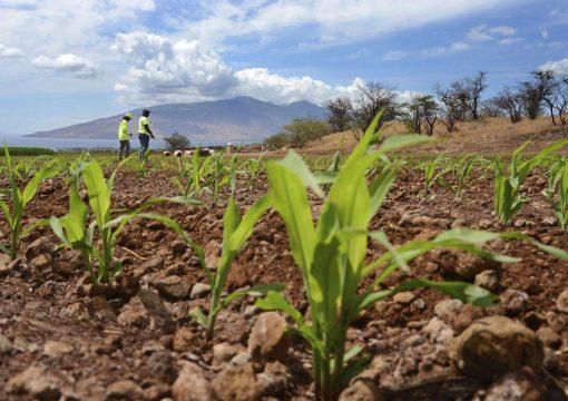 L'utilité des pesticides déboulonnée